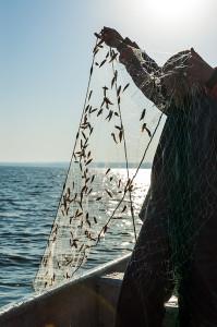Provfiskenät med fångst. Foto: Richard Nilsson