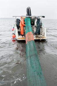 Upptag av trål efter trålning i Sätoftasjön. Foto: Richard Nilsson