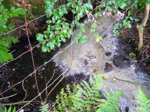 Avloppsutläpp från enskilt avlopp har lett till smutsvattensvamppåväxt och i stort sett total utslagning av insektslivet i en bäck. Foto: Richard Nilsson