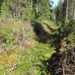 Igenväxt dike i skogen. Foto: SeppVei