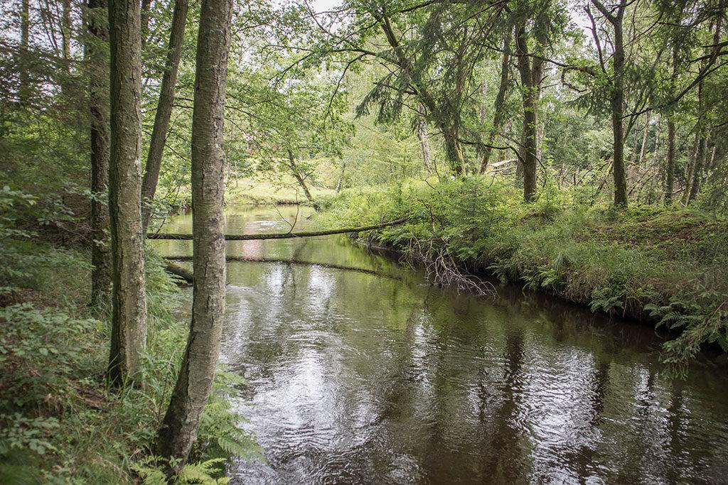 Pinnån uppströms Gelita. Provpunkt R42 i Rönneåns och Ringsjöns recipientkontrollprogram. Fotograferat 12 juli 2017. Foto: Birgitta Bengtsson