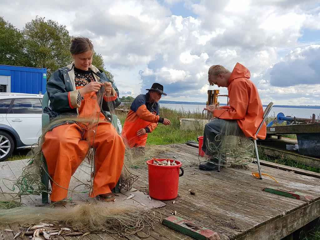 Näten från 2017 års provfiske i Östra Ringsjön töms på fisk av Rebecka, Janne och Linus.
