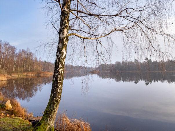 Ybbarpssjön, vid utflödet till Ybbarpsån