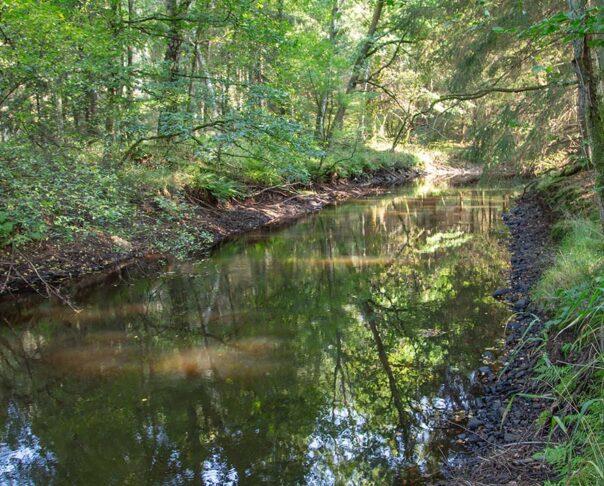 Pinnån uppströms Gelita, provpunkt R42